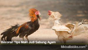 Bocoran Tips Main Judi Sabung Ayam