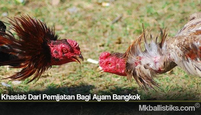 Khasiat Dari Pemijatan Bagi Ayam Bangkok