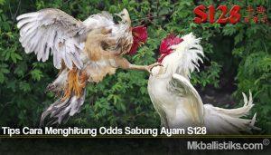 Tips Cara Menghitung Odds Sabung Ayam S128